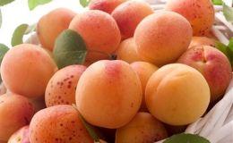 Блюда из абрикос — простые и вкусные рецепты выпечки с фото