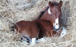 Гороскоп: рожденные в год Лошади