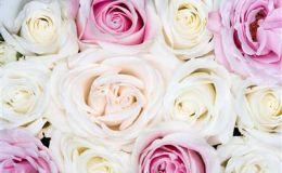 Необычные цветы к 8 марта – оригинальный подарок