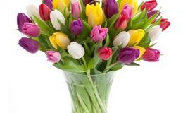 Как вырастить тюльпаны на подоконнике. 10 шагов
