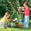 Безопасность ребенка в саду и огороде. 13 советов