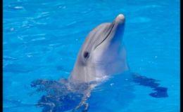 Магия дельфинов