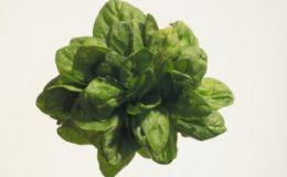 Шпинат назван лучшим листовым овощем в борьбе с лишним весом