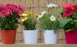 Могут ли комнатные растения навредить младенцу?