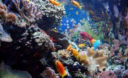 5 причин завести аквариум для ребенка