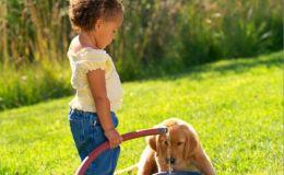 Собака для ребенка-аллергика