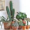 Комнатные растения, которые опасны для ребенка