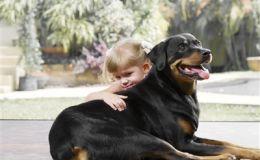 Животные в доме снижают риск заболевания астмой