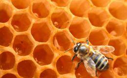 Когда мед может быть крайне опасен для ребенка