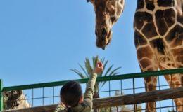 28 видео, которые доказывают, что дети в зоопарке — это круто