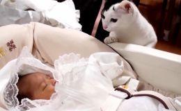 Как реагируют кошки, впервые увидев младенца: видео