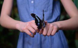 Создаем узорных бабочек и учим географию с ребенком (Видео)