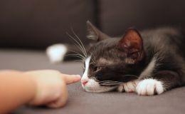 Ребенка поцарапала кошка: как не допустить развития опасной болезни