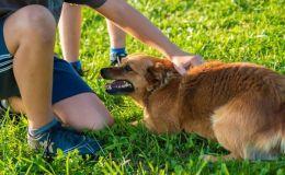 Ребенка укусила собака: первая помощь