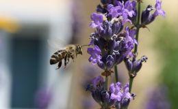 Ребенка ужалила пчела: первая помощь