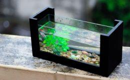 Ученые рассказали, почему в каждом доме должен быть аквариум