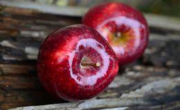 Диетологи назвали 5 продуктов, которые обязательно нужно есть зимой