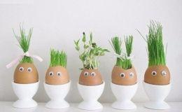 Домашние опыты для детей: веселый эксперимент с яичной скорлупой