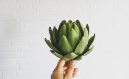 Почему женщинам нужно есть артишок: 6 незаменимых свойств овоща