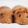 Идеальный питомец для ребенка: 5 миниатюрных домашних животных