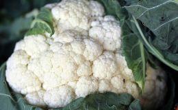 Диетологи назвали идеальный осенний овощ
