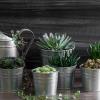 Очищаем воздух в доме: 9 неприхотливых комнатных растений