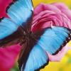 Игры для детей. Как гусеница превращается в бабочку: пошаговый мастер-класс с фото
