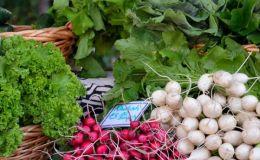 Весенние овощи: 5 правил употребления, о которых должен знать каждый родитель