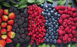 Ягодный прикорм: главные правила введения ягод в рацион ребенка
