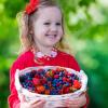 Лесные ягоды: какие можно и нельзя беременным и детям