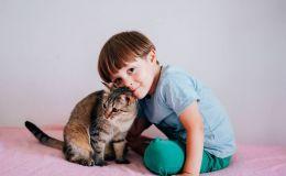 Ребенка поцарапала кошка: когда нужен врач. Комаровский