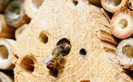 Как сделать с ребенком домик-гостиницу для насекомых
