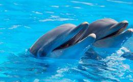 Дельфины не лечат: Ульяна Супрун развенчала миф о дельфинотерапии