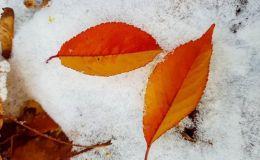 Прощай лето и здравствуй зима: прогноз погоды на ноябрь