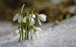 Когда наступит весна? Погода в марте