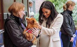 Меган Маркл хочет завести собаку из приюта для сына