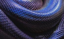 Змеиная диета для быстрого похудения: питаемся, как рептилии