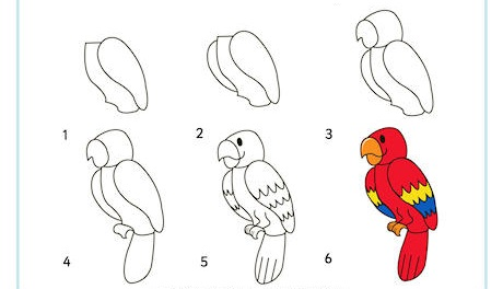 https://www.activityvillage.co.uk/sites/default/files/images/learn_to_draw_a_parrot_460_2.jpg